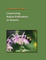 landowners guide to conserving pollinators