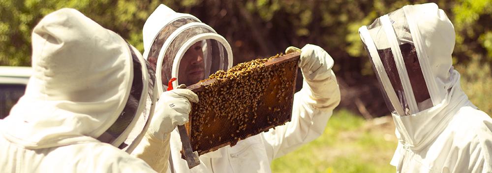 Farms at Work Beekeeping Mentorship Program - Checking Hives
